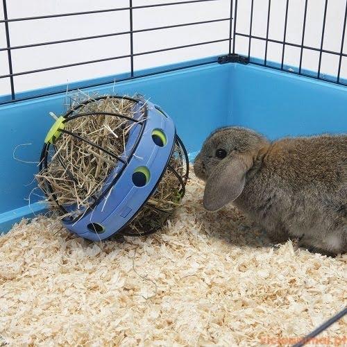 Bunny Toy ... 1