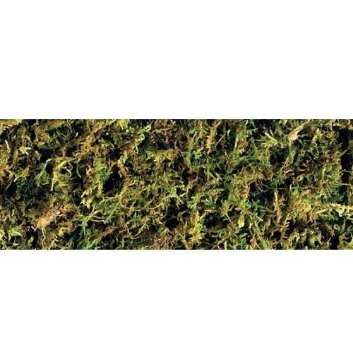 Forest Moss 1